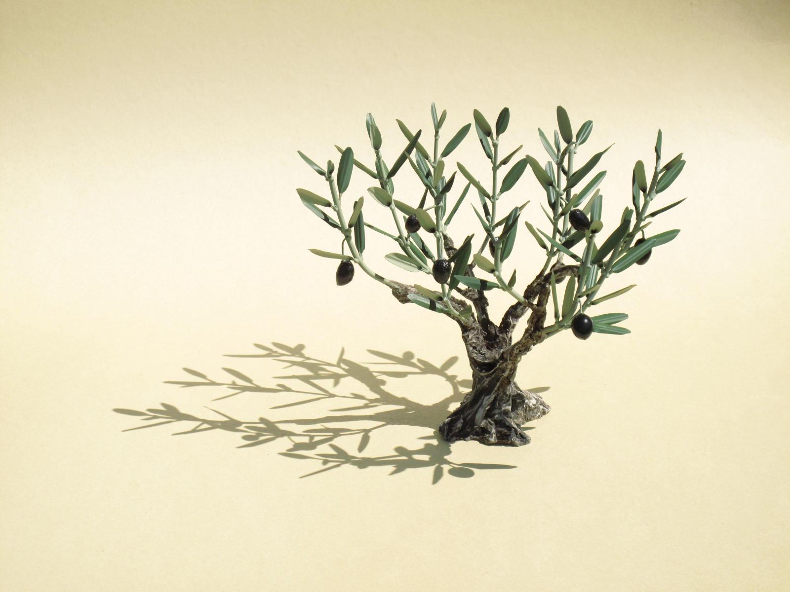 Journée autour de l'olivier
